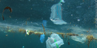 WWF Plastic straws, carrier bags and other garbage pollution in ocean