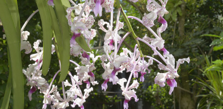 Mostra orchidee al MUSE